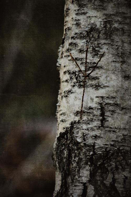 Bland sorgsna träd och sovande troll VIII