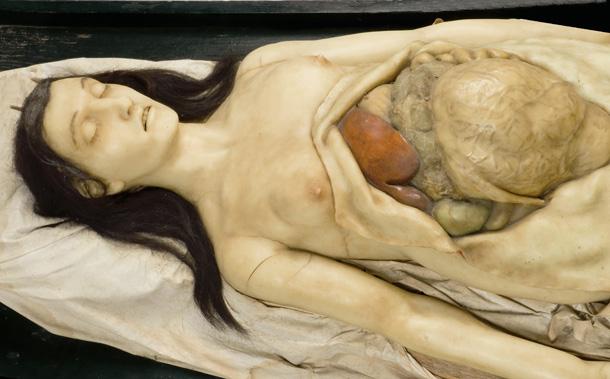 anotomical-Venus