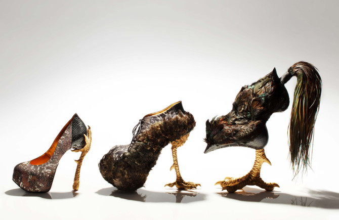 bird-witched04-670x435
