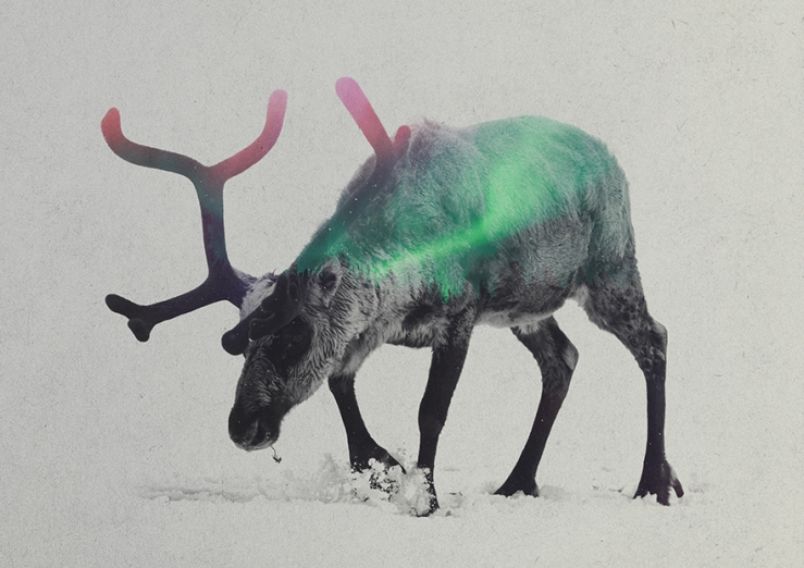 Double-Exposure-Of-Animals-In-The-Aurora-Borealis1__880