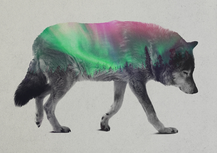 Double-Exposure-Of-Animals-In-The-Aurora-Borealis2__880
