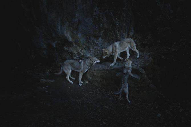kamila-nora-netik-02