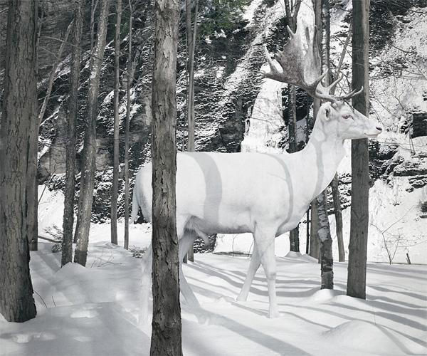 simen-johan-03
